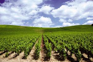 Bourgogne en 21 dans Traditions en Bourgogne assurance-credit-domaine-viticole-vin